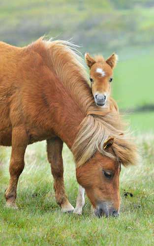 Undiscovered Secrets of Evolution from a Horse
